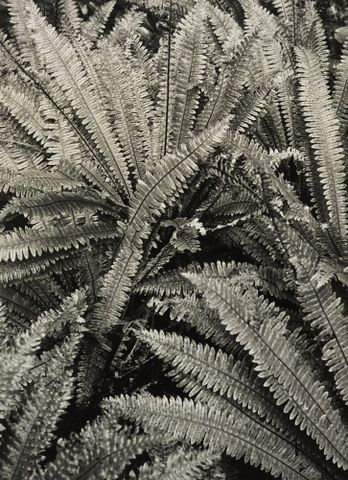 O.003789; Piupiu; 1984; Peryer, Peter ; without frame (image/jpeg)