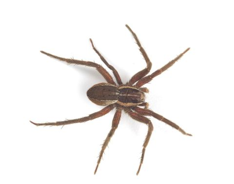 topic what spider is that collections online museum of new