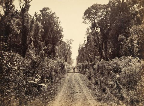 O.000750; Five Mile Avenue, Forty Mile Bush; circa 1875; Bragge, James ; without frame; colour corrected (image/jpeg)