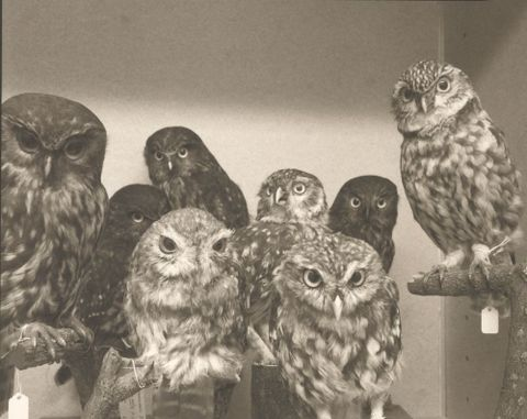 Moreporks (Bird Skins Room #2), Taranaki St, Wellington, 3 October 1995, 1995, Wellington. Aberhart, Laurence. Purchased 1996 with New Zealand Lottery Grants Board funds. © Te Papa.