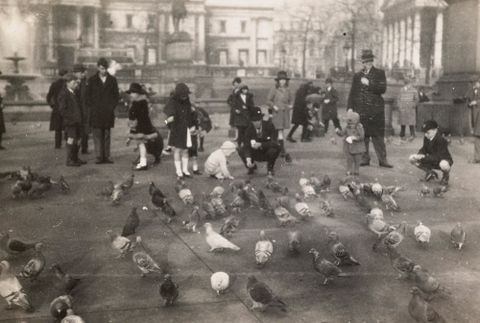 O.006568; Pigeons in Trafalgar Square, London; 1930 s; Lee-Johnson, Eric ; without frame (image/jpeg)