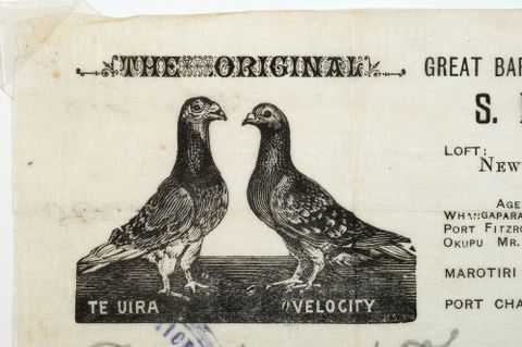 Tales from Te Papa Episode 99: Pigeon Posties