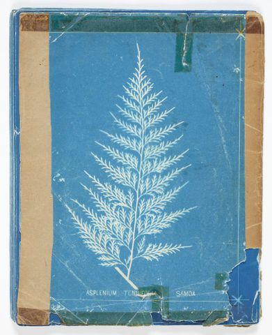 AL.000561; New Zealand ferns. 148 varieties…in two parts: part 2; 1880; Dobbie, Herbert ; Cover Back (image/tiff)