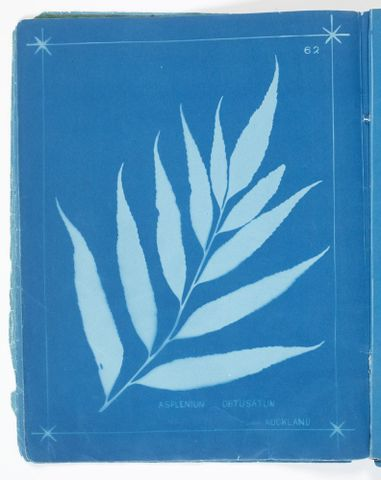 "Fern ""blue books"""