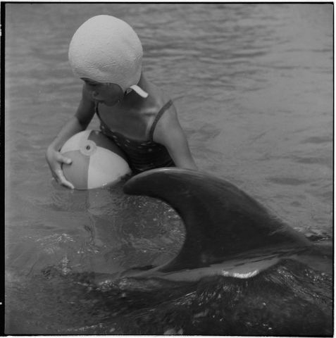 F.005004/02a; Jill Baker with Opo the dolphin, Opononi; 1956; Lee-Johnson, Eric (image/tiff)