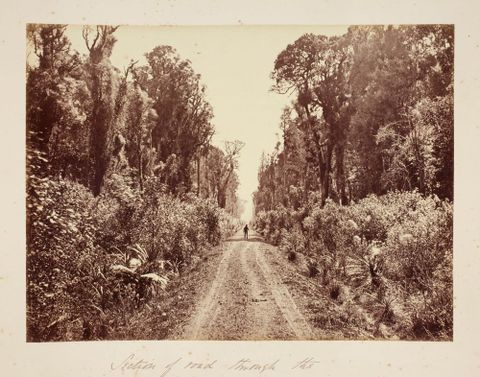Five Mile Avenue, Forty Mile Bush.  From the album: Views of New Zealand Scenery/Views of England, N. America, Hawaii and N.Z.
