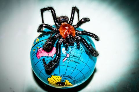 Peter Black, <EM>NZ Spider</EM>, 2010