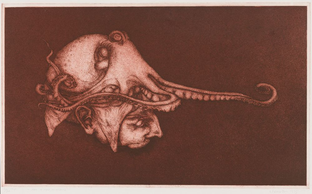 For The New Anatomy Octopus Collections Online Museum Of New