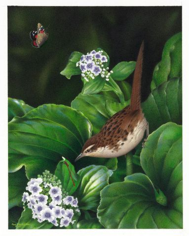 2006-0010-1 / 7; Chatham Island Fernbird. Bowdleria rufescens. From the series: Extinct Birds of New Zealand.; Martinson, Paul;  Masterton (image/tiff)