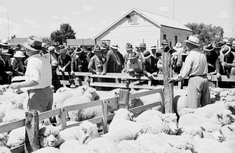 E.001694/33; Waipukurau saleyards, sheep being auctioned; 02.1941; Lee-Johnson, Eric (image/tiff)