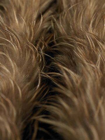 ME001378; Kahu kiwi (feather cloak); 1800-1900; Unknown ; detail 4; focal point 2 (image/tiff)