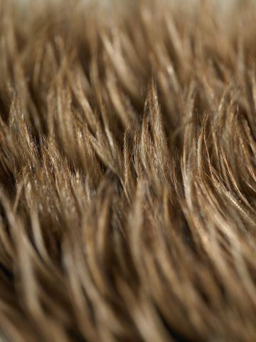 ME001378; Kahu kiwi (feather cloak); 1800-1900; Unknown ; detail 7 (image/tiff)