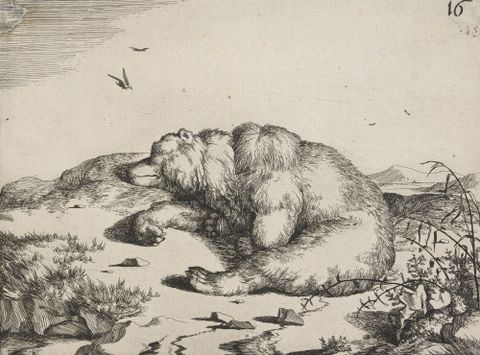 The set of the bears. Untitled plate 16