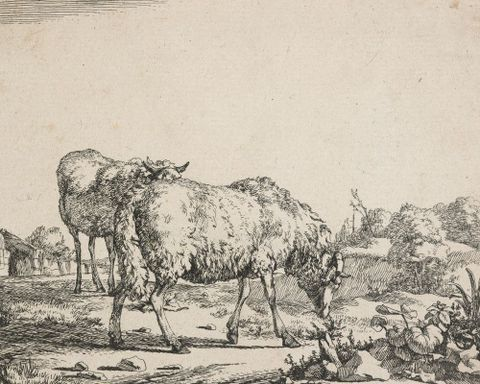 1869-0001-77; Sheep. Untitled.; 1664; de Bye, Marcus; without frame (image/jpeg)