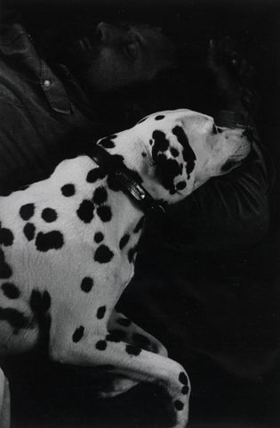 Jimmy Keogh and dalmatian, Auckland, 1968