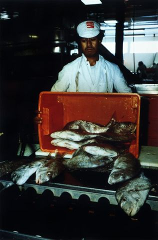 Jowitt, Glenn. Jaybel Fisheries, Auckland, 1981. From: Polynesia Here and There. Colour Photograph. Cibachrome print. 1983-0081-1/11-20; unknown ; cropped (image/jpeg)