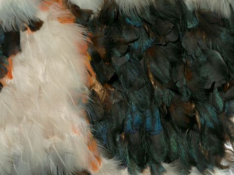 ME000739; Kahu huruhuru (feather cloak); 1800-1900; Ngai Tuhoe; Unknown; Feathers, pigeon, tui, kaka, velcro backing along top of back, muka ; detail 05 (image/tiff)